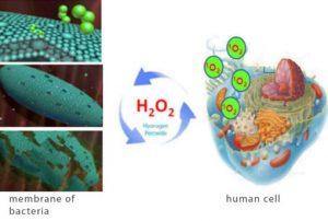 Aktivni kisik in aktivne kisikove spojine